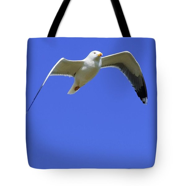 Seagull In Flight Tote Bag by Ben Welsh