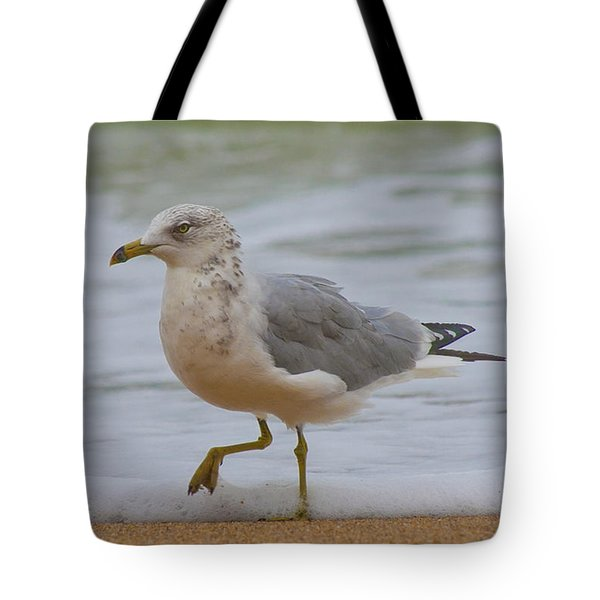 Seagull Stomp Tote Bag by Betsy Knapp