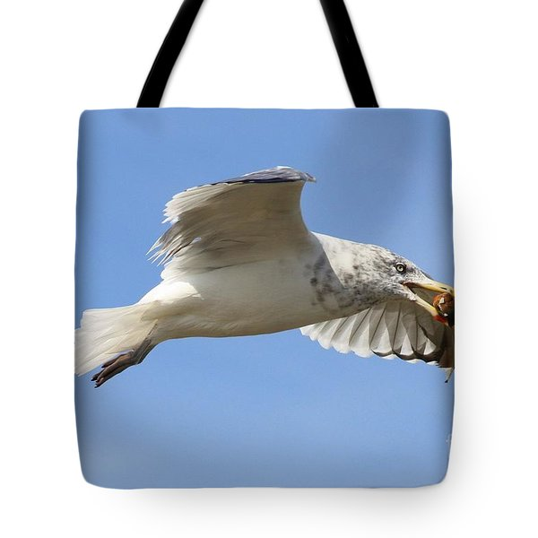 Seagull With Snail Tote Bag by Carol Groenen