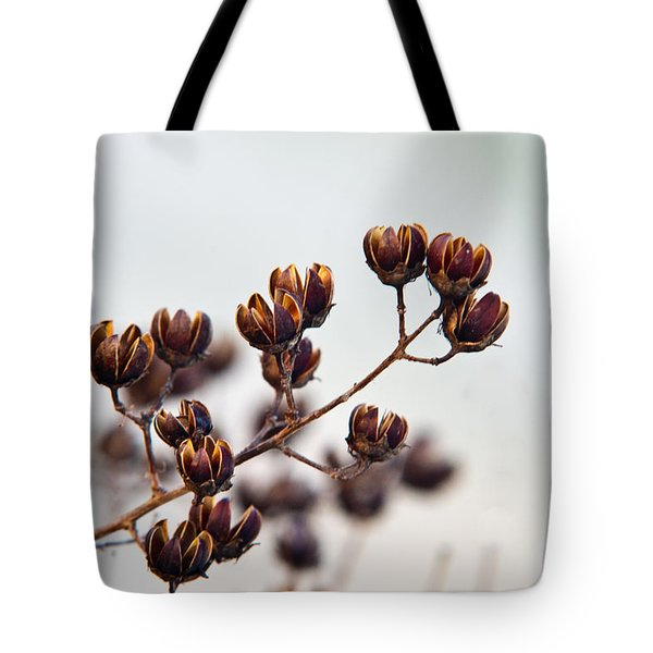 Seed Pods 1 Tote Bag by Douglas Barnett