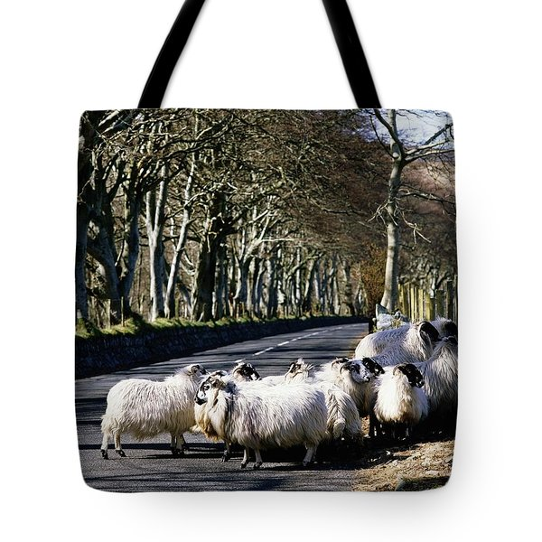 Sheep On The Road, Torr Head, Co Tote Bag by The Irish Image Collection