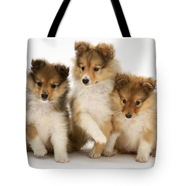 Sheltie Puppies Tote Bag by Jane Burton