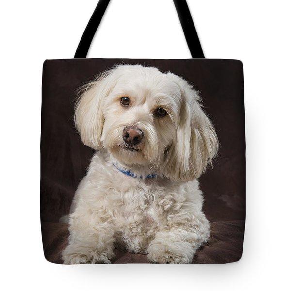 Shih Tzu-poodle On A Brown Muslin Tote Bag by Corey Hochachka