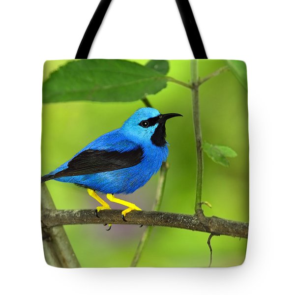 Shining Honeycreeper Tote Bag by Tony Beck