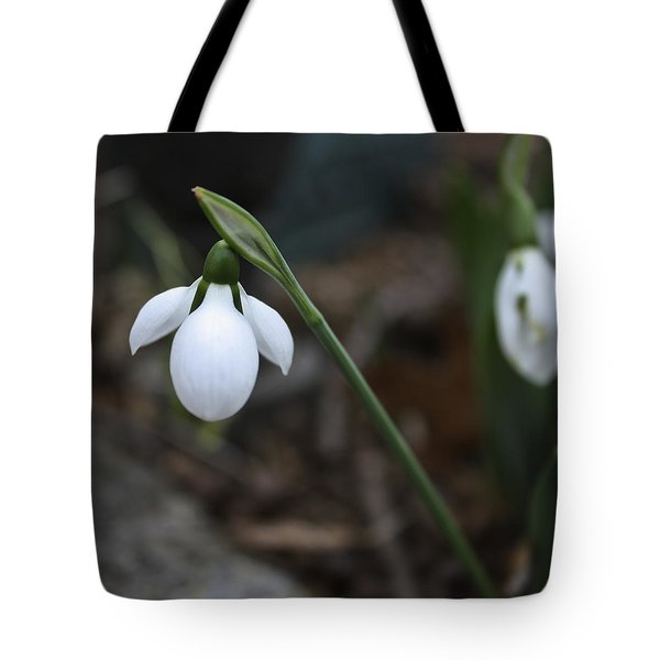 Single Snowdrop Squared 1 Tote Bag by Teresa Mucha