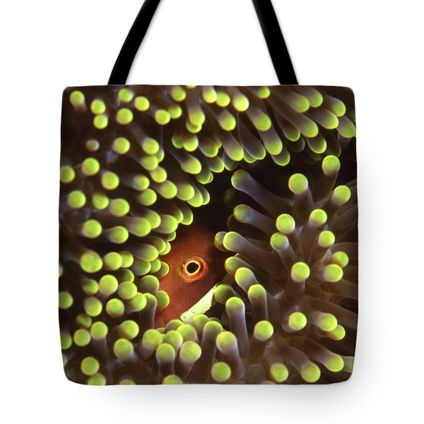 Skunk Clownfish Hiding In Anemone Tote Bag by Beverly Factor