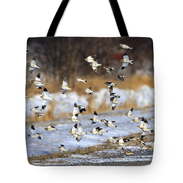 Snow Buntings Tote Bag by Tony Beck