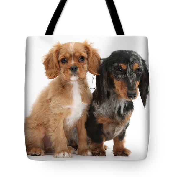 Spaniel & Dachshund Puppies Tote Bag by Mark Taylor