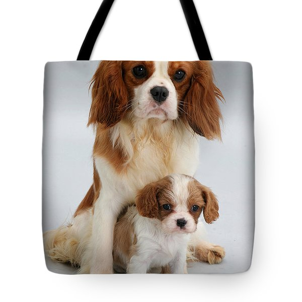 Spaniels Tote Bag by Jane Burton