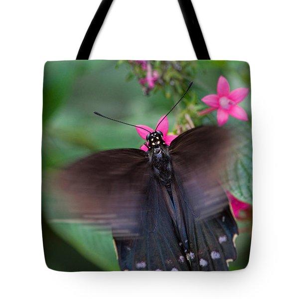 Spicebush Swallowtail Tote Bag by Joann Vitali