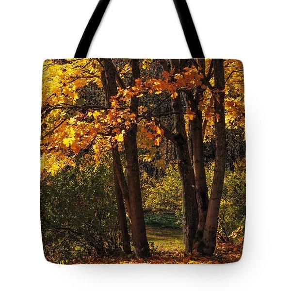 Splendor Of Autumn. Maples In Golden Dresses Tote Bag by Jenny Rainbow