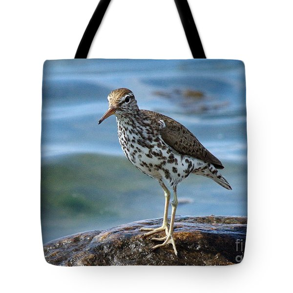 Spotted Sand Piper 6 Tote Bag by Andrea Kollo