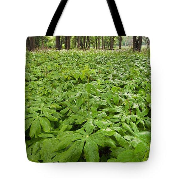 Springtime Mayapples Tote Bag by Steve Gadomski