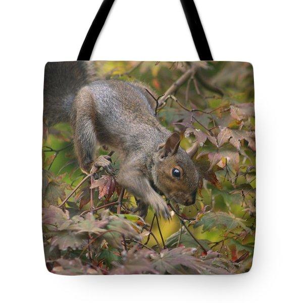 Squirrel In Fall Tote Bag by Valia Bradshaw