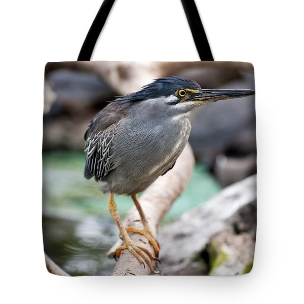Striated Heron Tote Bag by Fabrizio Troiani