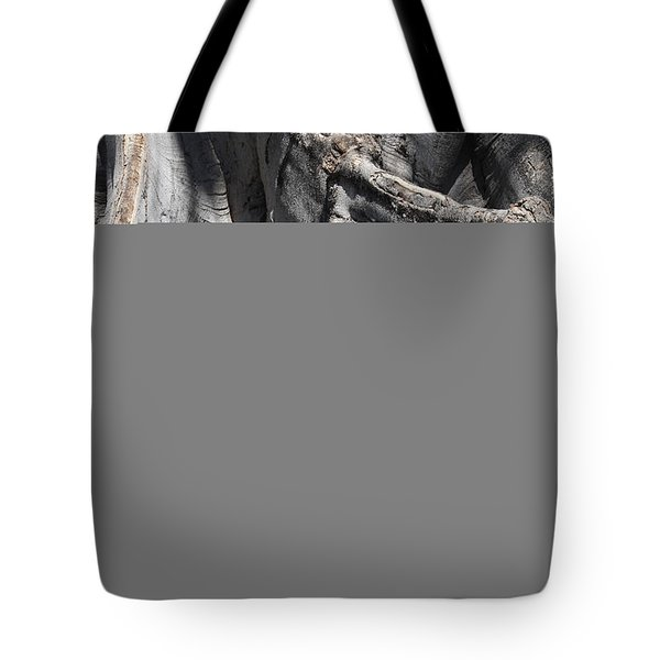 Strong Roots in Florida Tote Bag by Carol Groenen