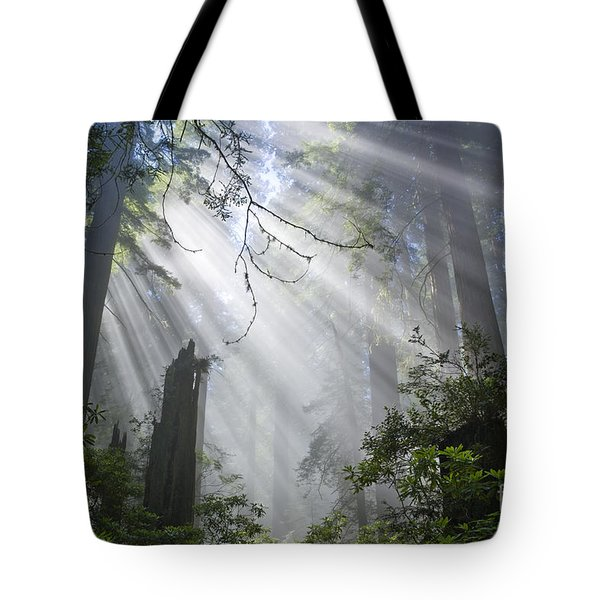 Sun Beams In Redwood Forest Tote Bag by Inga Spence and Photo Researchers