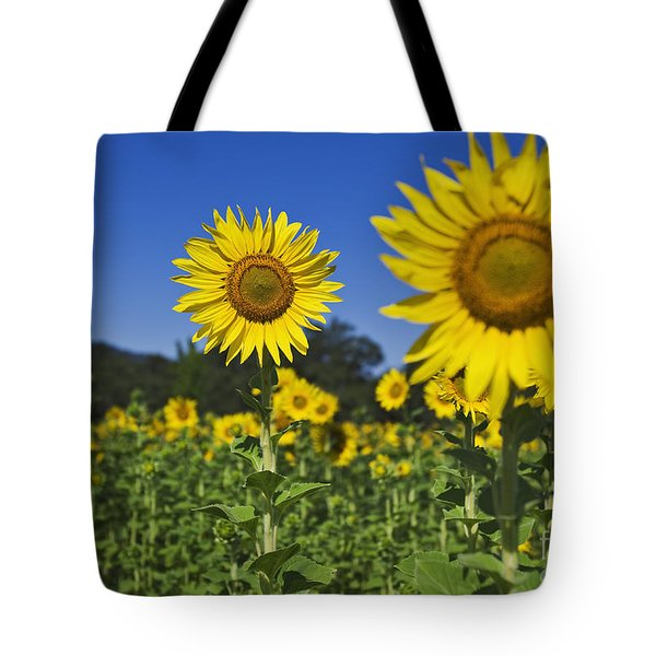 Sunflower Tote Bag by Dennis Flaherty and Photo Researchers
