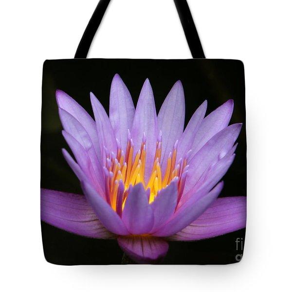 Sunlit Water Lily Tote Bag by Sabrina L Ryan