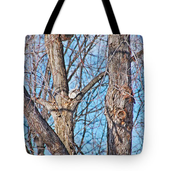 Sunning In The Tree Tote Bag by Aimee L Maher Photography and Art Visit ALMGallerydotcom
