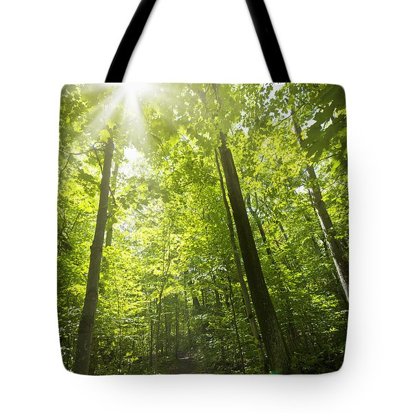 Sunny Forest Path Tote Bag by Elena Elisseeva