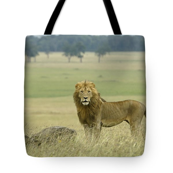 Surveying His Kingdom Tote Bag by Michele Burgess