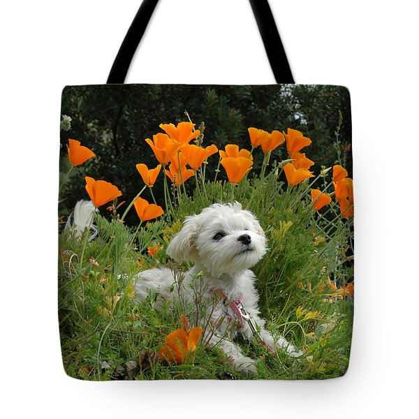 Sweet Sunshine Tote Bag by Lynn Bauer