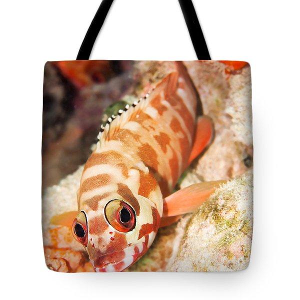 The Hawkfish Tote Bag by MotHaiBaPhoto Prints