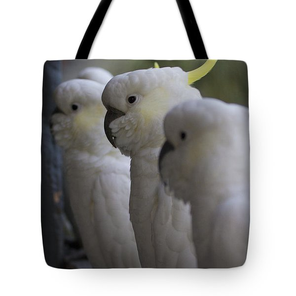 The Line-up Tote Bag by Douglas Barnard