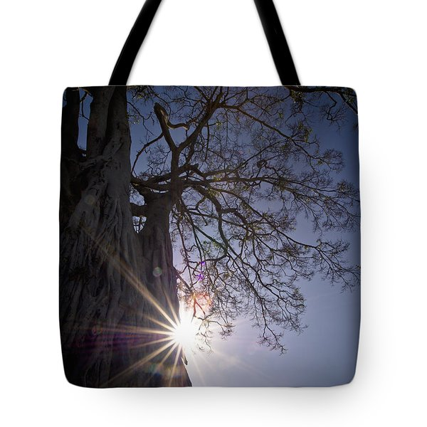 The Sunlight Shines Behind A Tree Trunk Tote Bag by David DuChemin