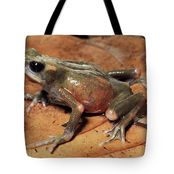 Toad Atelopus Senex On A Leaf Tote Bag by Michael & Patricia Fogden