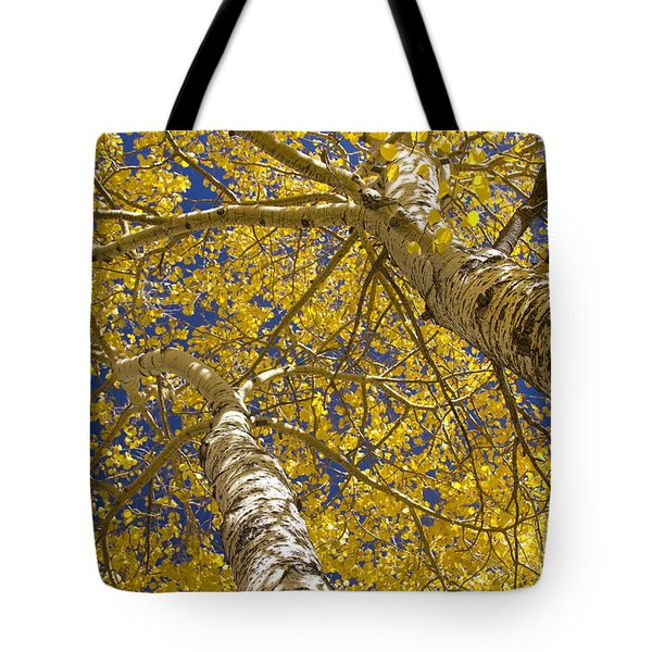 Towering Autumn Aspens With Deep Blue Sky Tote Bag by James BO  Insogna