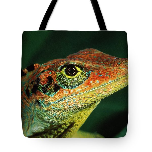 Transverse Anole Anolis Transversalis Tote Bag by Murray Cooper