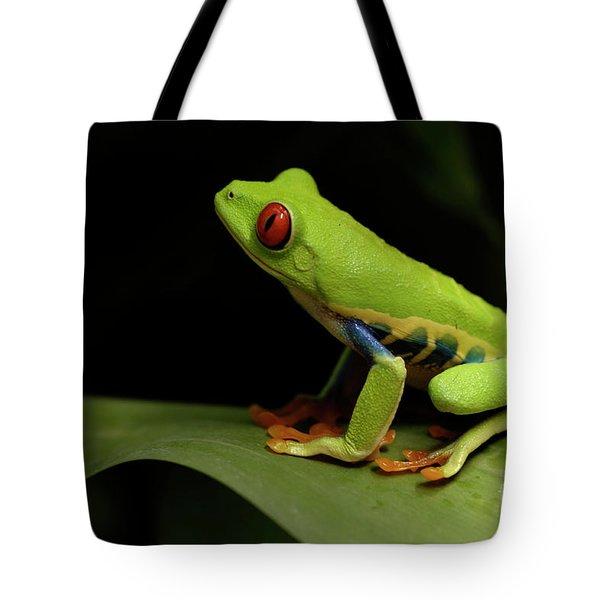 Tree Frog 14 Tote Bag by Bob Christopher