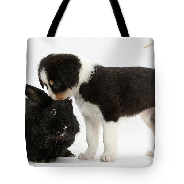 Tricolor Border Collie Pup With Black Tote Bag by Mark Taylor