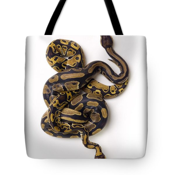 Two Ball Python Snakes Intertwined Tote Bag by Corey Hochachka