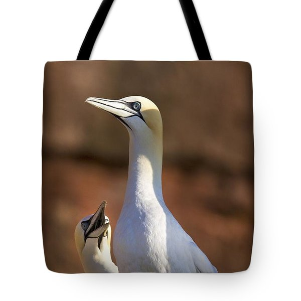 Two Gannets Interacting Perce, Quebec Tote Bag by Richard Wear