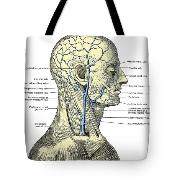 Veins Of The Head And Neck Tote Bag by Science Source