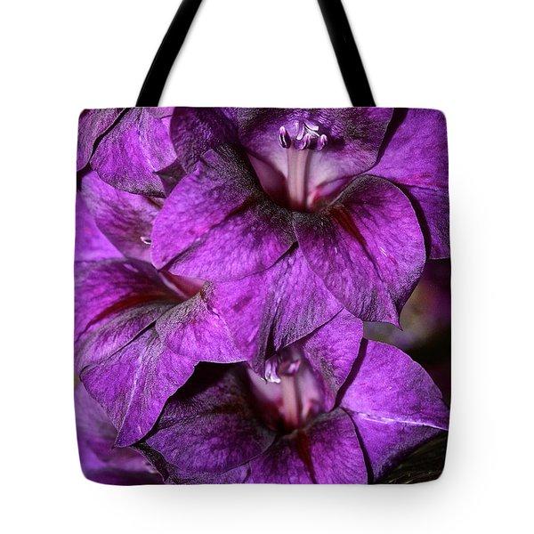 Violet Glads Tote Bag by Susan Herber