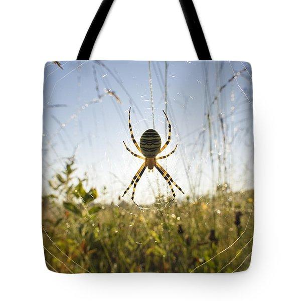 Wasp Spider Argiope Bruennichi In Web Tote Bag by Konrad Wothe