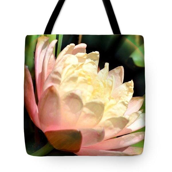 Water Lilly In Bloom Tote Bag by Maria Urso