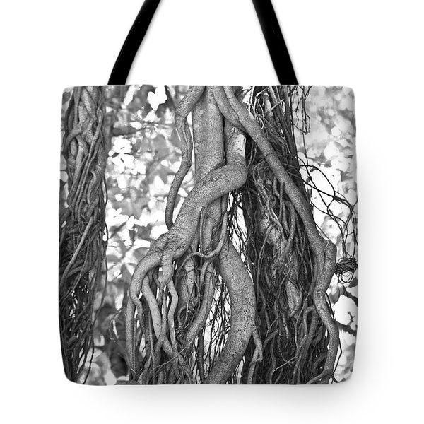 What Trees Know Tote Bag by Betsy A  Cutler