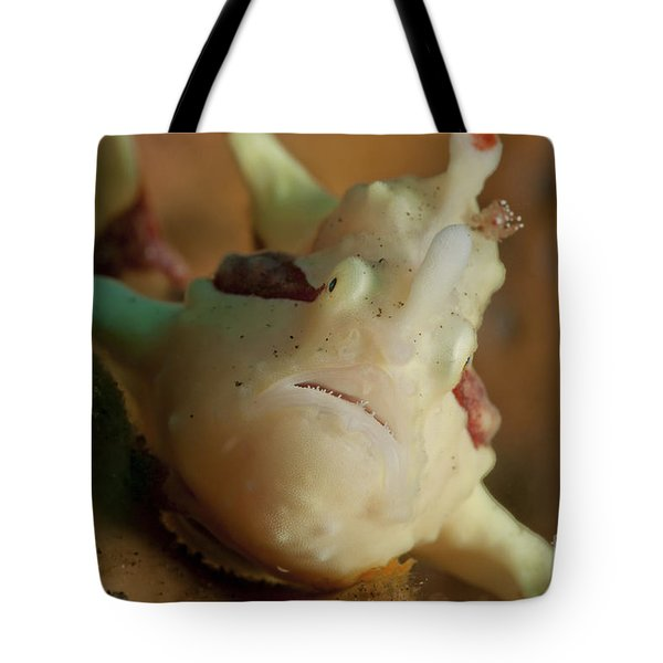 White And Red Clown Frogfish, Bali Tote Bag by Mathieu Meur