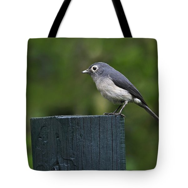 White-eyed Slaty Flycatcher Tote Bag by Tony Beck