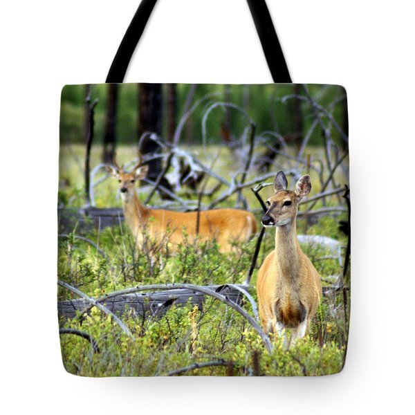 Whitetails Tote Bag by Marty Koch