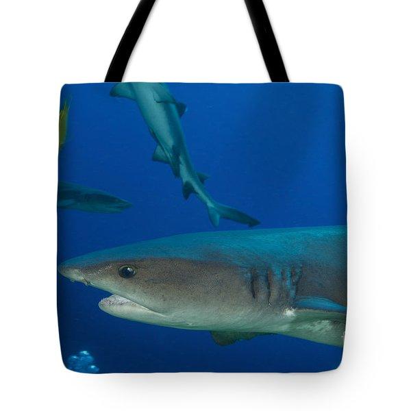 Whitetip Reef Shark, Papua New Guinea Tote Bag by Steve Jones