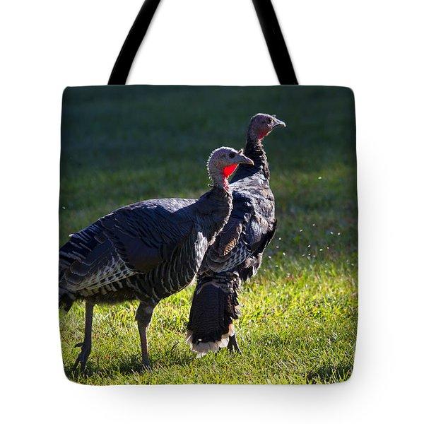 Wild Turkeys Tote Bag by Mike  Dawson