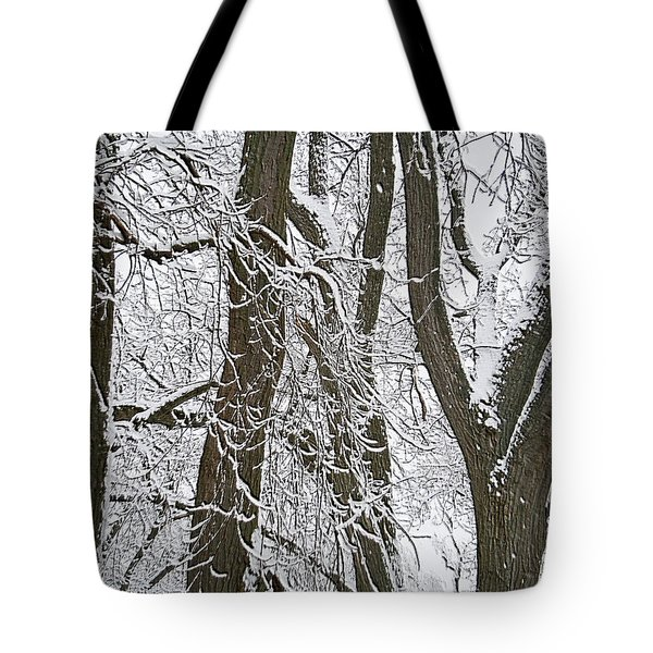 Winter Trees  Tote Bag by Aimee L Maher Photography and Art