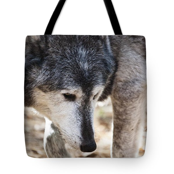 Wolfs Beauty Tote Bag by Karol Livote