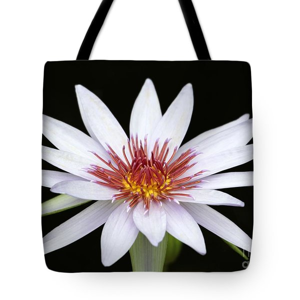 Wonderful White Water Lily Tote Bag by Sabrina L Ryan